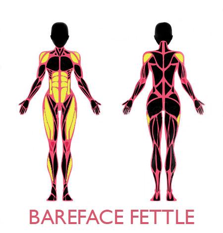 bff-female-muscular-anatomy-abs