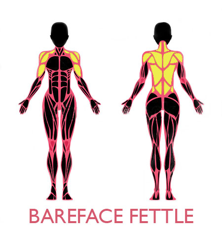 bff-female-muscular-anatomy-back